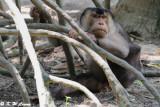 Monkey DSC_2071