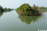 Wetland DSC_8607
