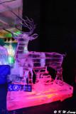 Ice Sculpture Exhibition DSC_8507