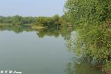 Wetland DSC_8608