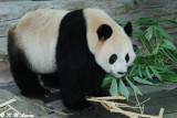 Panda DSC_3128