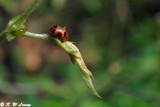Lady Beetle DSC_8660