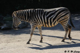 Zebra (DSC_3861)