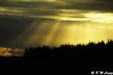 Rays of light DSC_3754