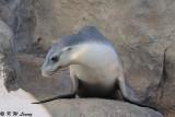 Seal (DSC_4961)