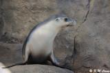 Seal (DSC_4959)