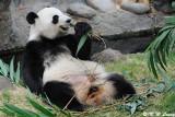 Panda DSC_8819
