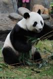 Panda DSC_8826