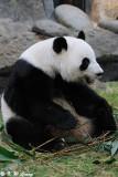 Panda DSC_8825