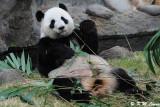 Panda DSC_8798