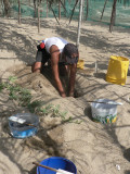 Digging out the turtle eggs underground