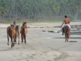 Horses are guided along the coast
