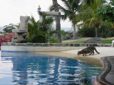 The infinity pool appealed to humans and cats alike