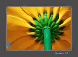 Iron flower