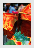 10th Paris Tropical Carnival 48