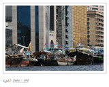 Dubaï - UAE - 72