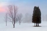 Trees In Fog 05936-7