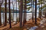 Lakeside Pines 05983