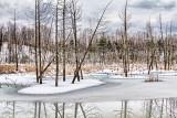Thawing Marsh 06873