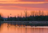 Sunrise Geese 08222