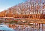 Tree Row Reflection DSCF01272