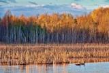 Marsh At Sunrise 20110508