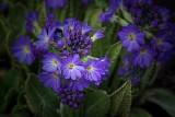 Purple Flowers 24752