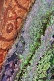 Natural Abstract 10742