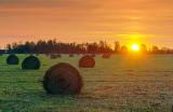 Bales At Sunrise 11397-9