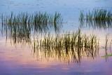 River Grass 11683