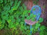 Chair In Ivy DSCF02111 Art