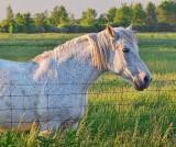 Sunset Horse 10360