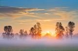 Tree Line At Sunrise 14126
