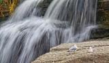 Gulls At Hog's Back 13956