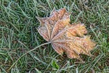 First Frost 16093