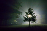 Tree In Night Fog 16387-92