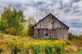 Old Barn Among Weeds 16556-7