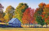 Autumn Color 16747-9