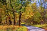 Autumn Back Road 16881