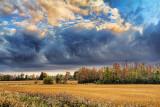 Autumn Landscape 17033