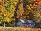 Autumn Scene 16799