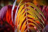 Backlit Autumn Sumac 17592