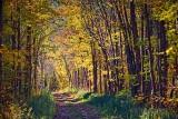 Autumn Trail 17538