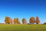 Autumn Tree Line 17850