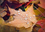 Autumn Raindrops DSCF02561