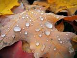 Autumn Raindrops DSCF02566