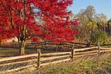 Autumn Scene 17843