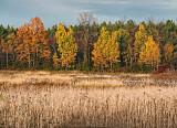 Autumn Landscape 17947