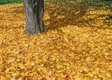 Autumn Fallen Leaves DSCF02583