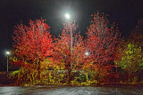 Autumn Streetlights 20111021